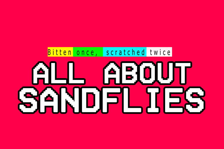 all about sandfly bites and sandflies